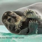 BEST-OF Europäischer Naturfotograf des Jahres